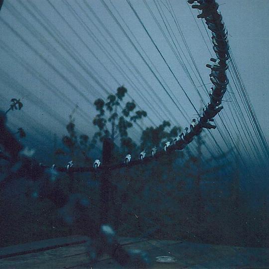 Windharp - detail